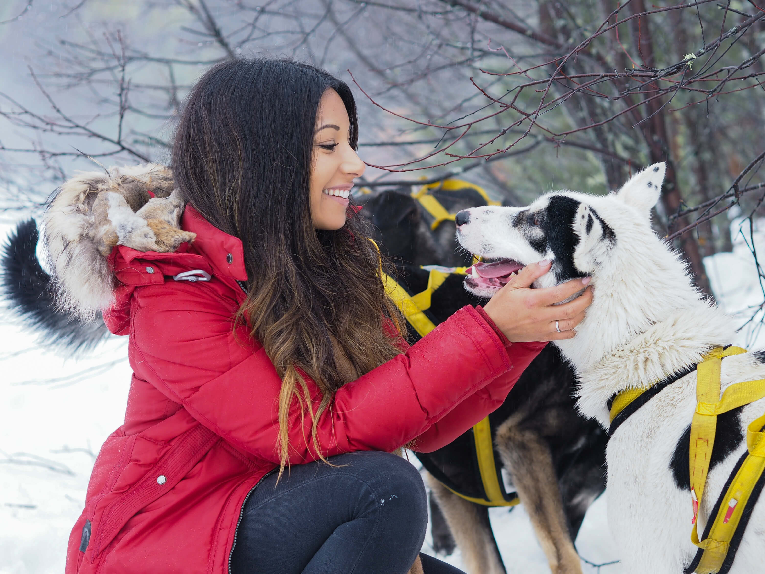 Dog Sledding Quebec